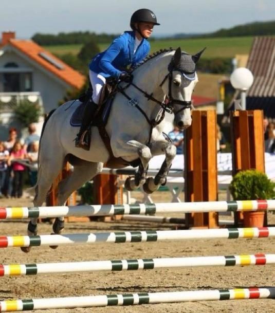 Successful Horses by Cento x Gardez